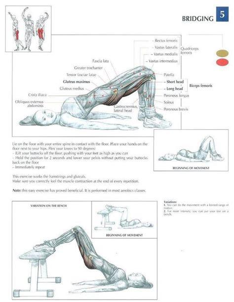 leg workout diagram bridging health fitness exercises diagrams