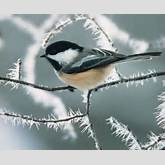 Add some life to your Winter Landscape by attracting wild birds!