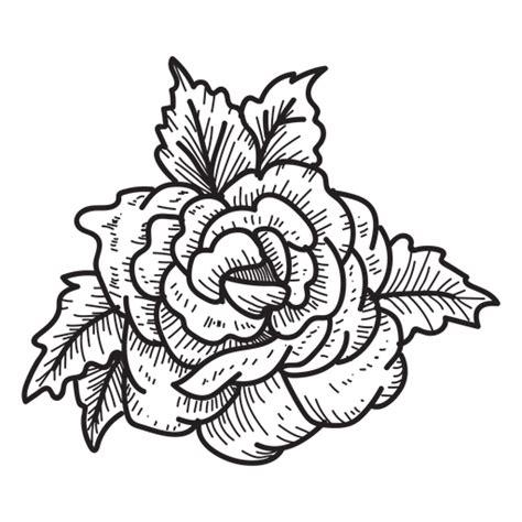 sketchbook transparent background blooming sketch icon flower transparent png