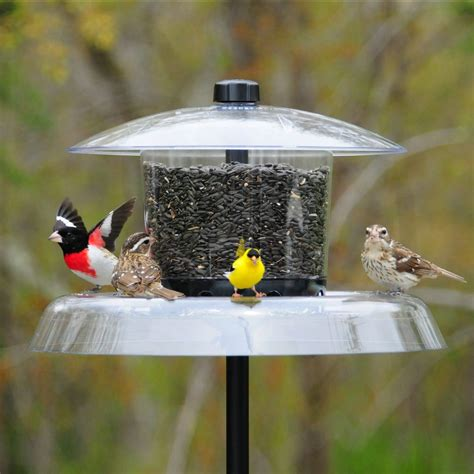 how to clean droll yankee bird feeder wiring diagrams
