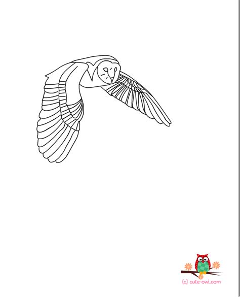 printable barn owl pictures free printable owl coloring pages for kids