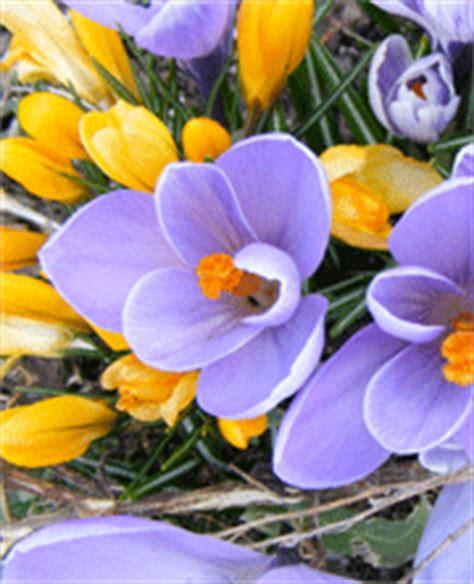 come agiscono i fiori di bach fiori di bach una cura per le emozioni