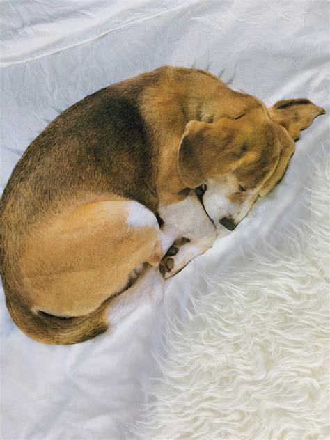hund darf nicht ins bett mein hund darf mit ins bett stubenblog