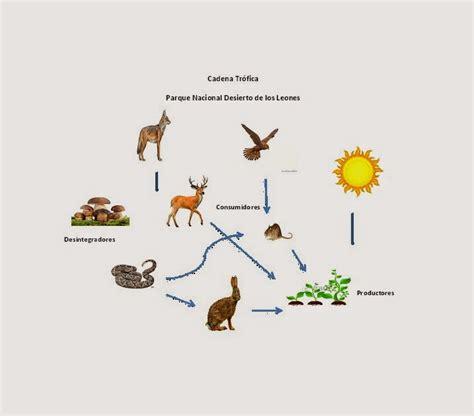cadenas alimenticias del desierto ecologia 602 cobaem platel toluca iii desierto de los leones