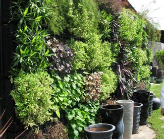 plants for wall gardens v豌盻拵 c 226 y xanh tr 234 n t豌盻拵g tr盻渡g rau s蘯 ch t蘯 i nh 224 thi c 244 ng