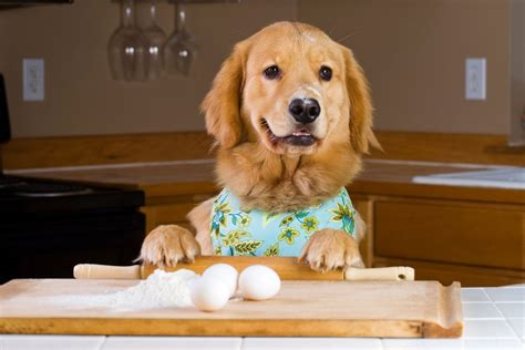 cooking for dogs cooking for your and you recipes for dogs and their humans to the
