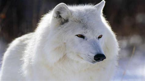 Imagenes De Animales Hermosos Del Mundo | imagenes de los animales mas hermosos del mundo imagui