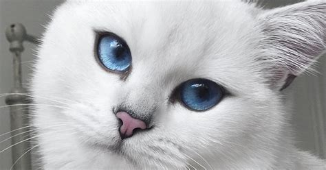 blue eyed names cat with blue and winged eyeliner takes flawless selfies huffpost