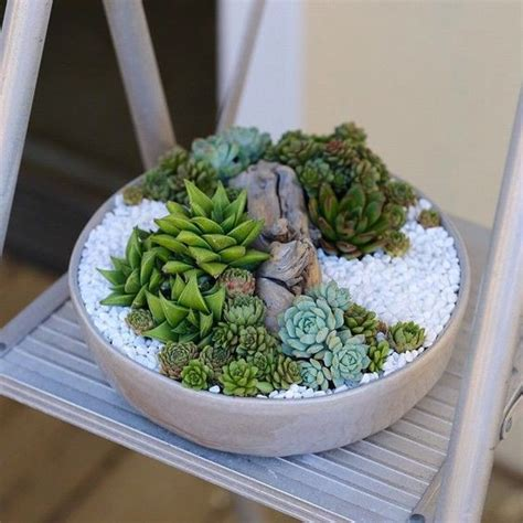 facts about succulents 10 interesting facts about succulents