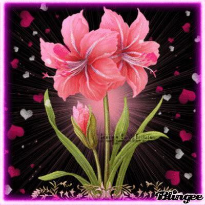 imagenes rosas hermosas animadas fotos animadas hermosas flores para compartir 125659593