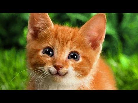 tutorial cat unik membuat kucing senyum tutorial photoshop unik youtube