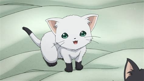 Anime Cat by Anime White Cat Search Anime