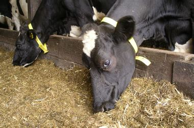 alimentazione vacche da latte mangimi spada vitamine minerali e materie prime di