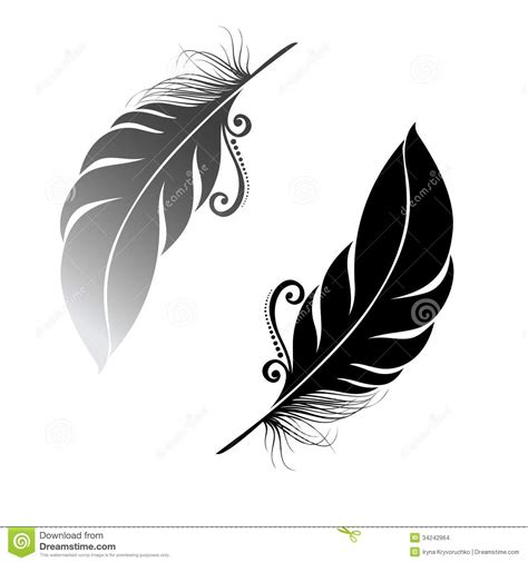 feather tattoo vector abstract feather bird stock images image 34242964