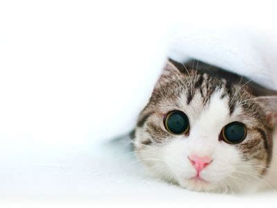 wallpaper anak harimau lucu inilah kumpulan foto gambar video anak kucing lucu mania