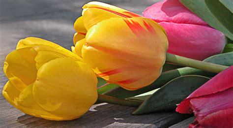 fiori recisi nomi mazzo fiori e foglie