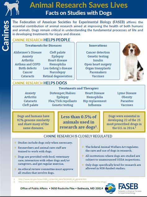 research paper on dogs college essays college application essays research dogs