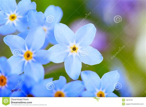 4 flores azules para jard flores azules hermosas macro estupenda imagen de archivo