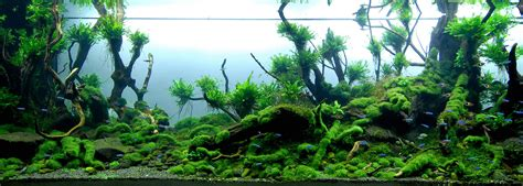 forest aquascape 1000 images about aquascapes quot forests quot on pinterest