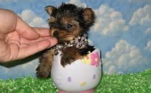 puppies for sale cleveland tn dogs cleveland tn free classified ads