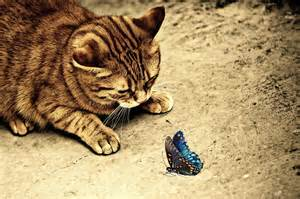 free photo cat sepia cute mackerel tiger free image on pixabay 1055166