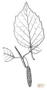 birch leaf coloring page 301 moved permanently