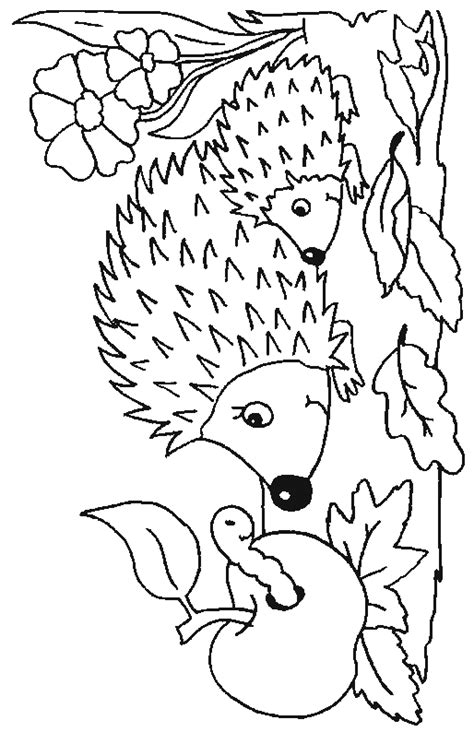 Coloring Page Of A Hedgehog | hedgehog coloring pages coloringpages1001 com