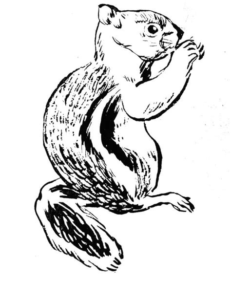 ground squirrel coloring page the burgess animal book for children coloring page