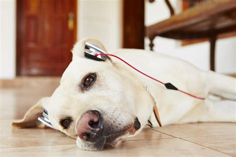 new technology for dogs wearable tech for dogs