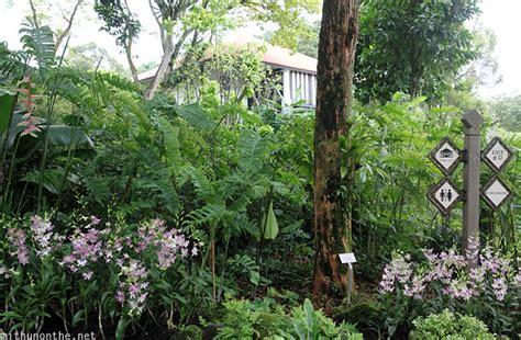 plants in singapore botanic gardens singapore day 3 bukit timah and singapore botanic gardens