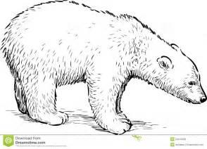 polar bear cub stock vector image 54144029