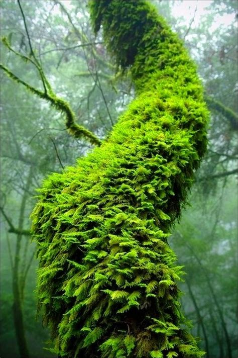 mossy green green moss tree art craft ideas pinterest