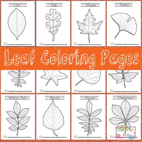 Leaf Identification Coloring Pages | free leaf identification coloring pages free homeschool