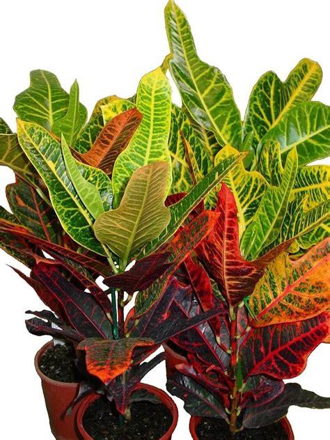 piante verdi da appartamento piante verdi da appartamento piante appartamento come
