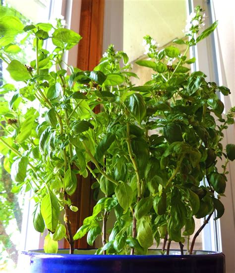 small plants to grow indoors the best indoor plants to grow in small spaces