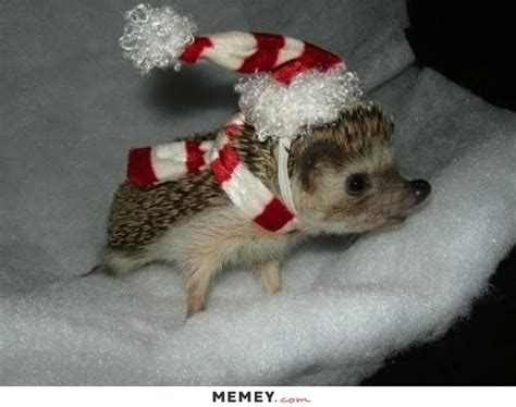 Wonderful Free Christmas Felt Patterns #5: Cute-baby-hedgehog-christmas-costume.jpg