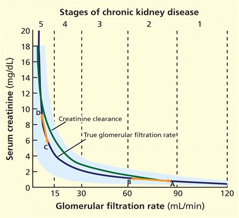 creatinine 60 mg rsidefenser what is the significance of gfr measurement
