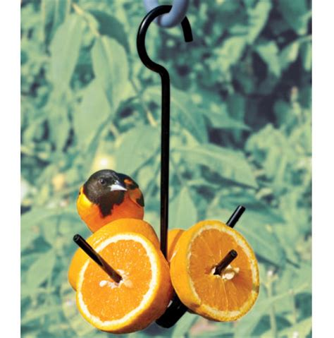 wild bird fruit feeders nature house metal fruit feeder