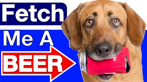how to a to fetch a how to teach your to fetch a funnydog tv