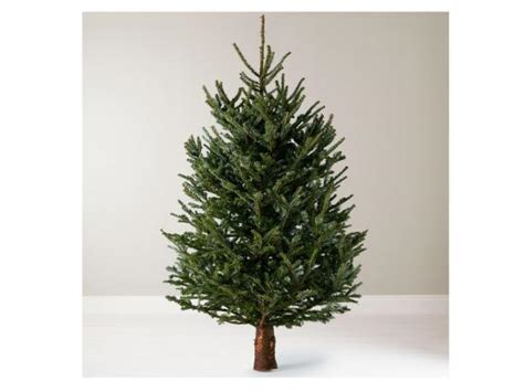 echter weihnachtsbaum 14 best real trees the independent