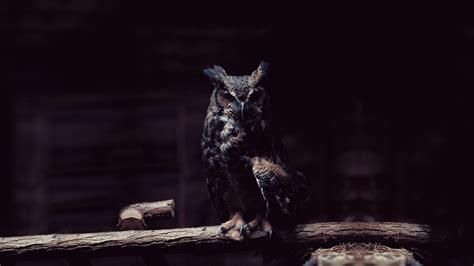 wallpaper black owl hd owl wallpaper wallpapersafari