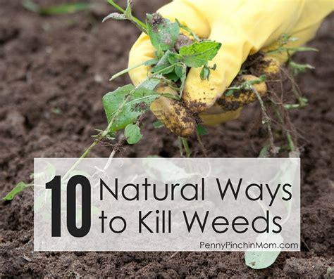 ten natural ways to kill weeds