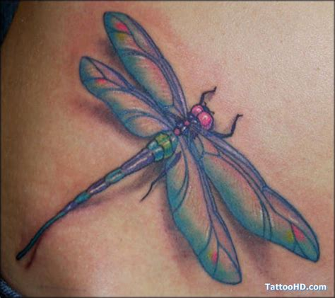 8 creative tribal dragonfly tattoos 12 best images about jimbo magilacuddy on