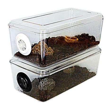 tarantulascorpionsnakemillipedecagevivarium stackable millipede tarantula tarantula