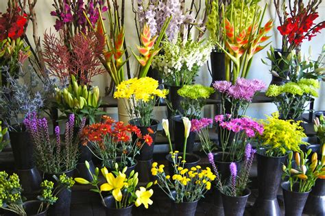 Wholesale Flowers by Wholesale Flowers In Buckets Wholesale Wedding Flowers