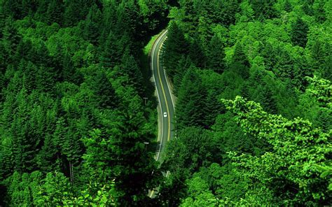 Green nature   beautiful road through forest