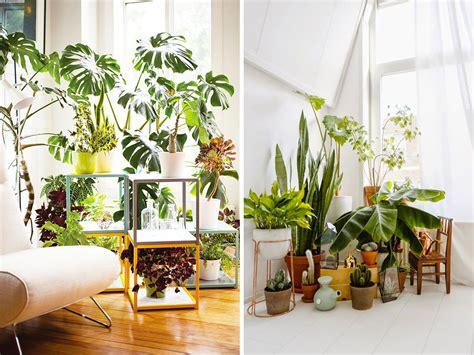 the best indoor plants the best plants for indoor bonjour chiara