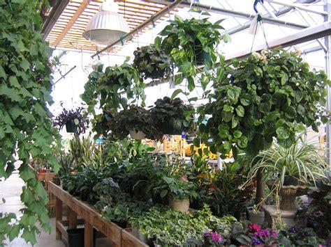 indoor plants sargents nursery