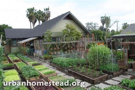 family grows  lbs  food   acre urban farm