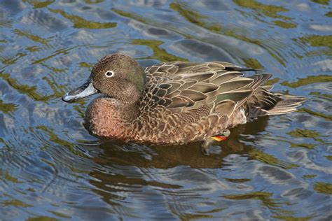 brown and teal brown teal wikipedia